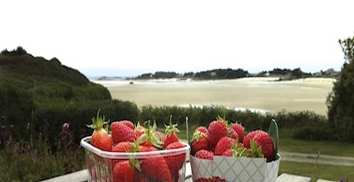 assiette_fraise