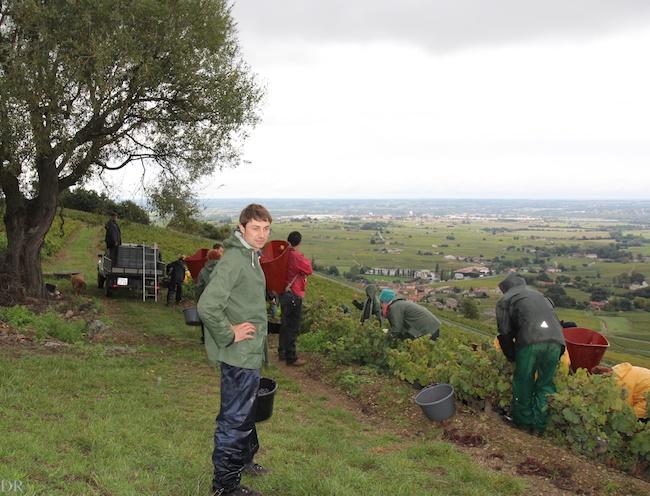 Claude Geoffray pendant les vendanges d'octobre 2013 sur les pentes du Mont Brouilly.