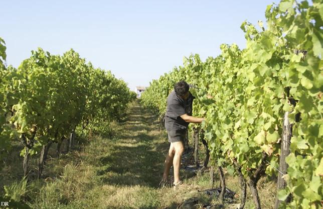 Frédéric Ribes, président du Syndicat de défense des vignerons de l'AOC Fronton