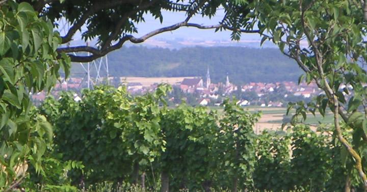 En arrière-plan, le village de Saint-Pourçain