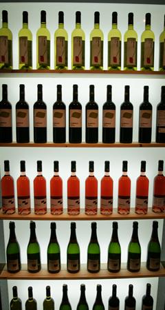 vin-sans_IG