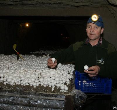 Le champignoniste Jacky Roulleau