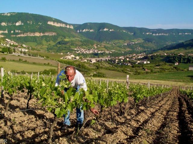 Alain Montrozier dans ses vignes