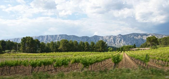 Vignobles des côteaux d'Aix en Provence