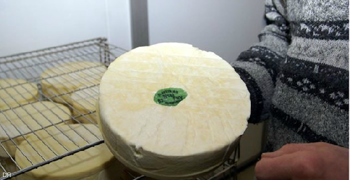 saint-nectaire-fromage