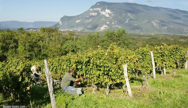 cave de chautagne vin de chautagne
