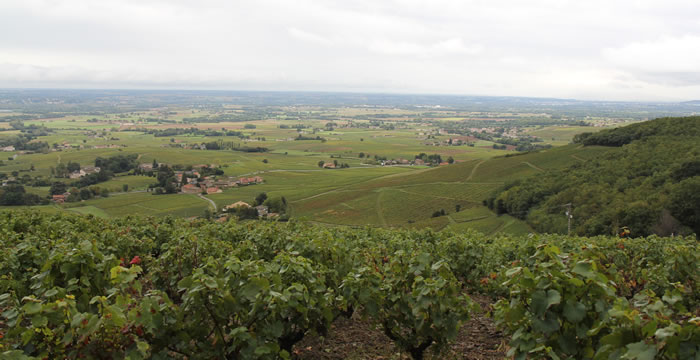 vue-Brouilly