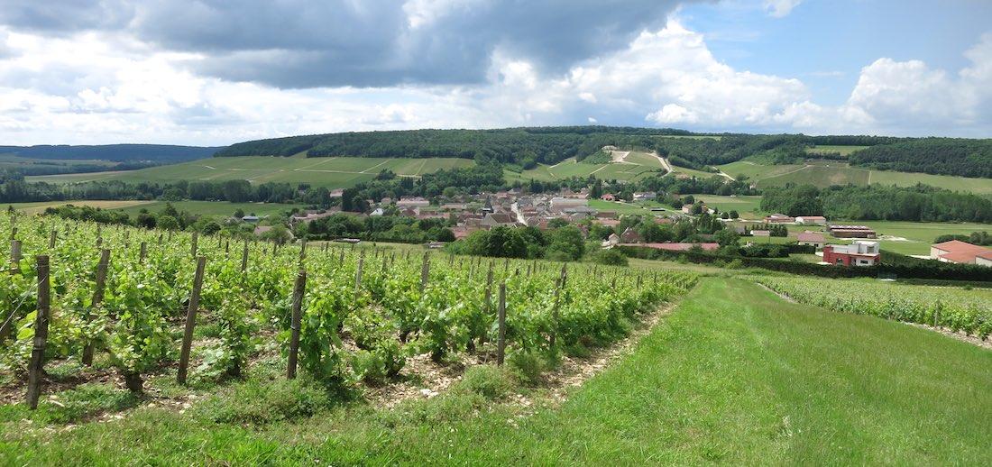 chassenay-vigne1