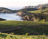 Les Côtes du Roussillon fêtent les 40 ans de leur AOP