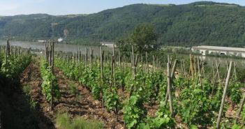 Les vins Vitis Vienna, futur cru des Côtes-du-Rhône septentrionales ?